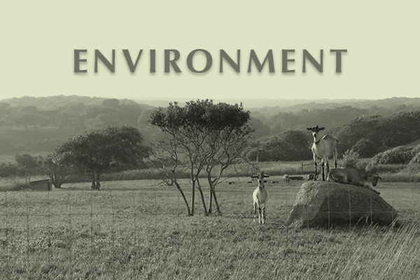 Endowment for Martha's Vineyard Environment